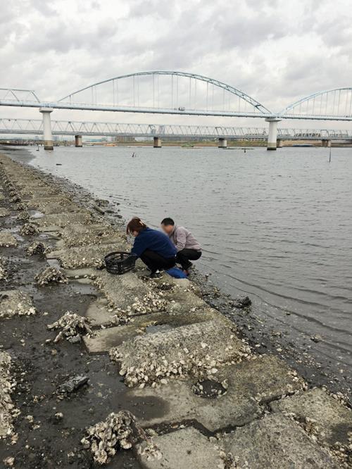 江戸川漁業被害